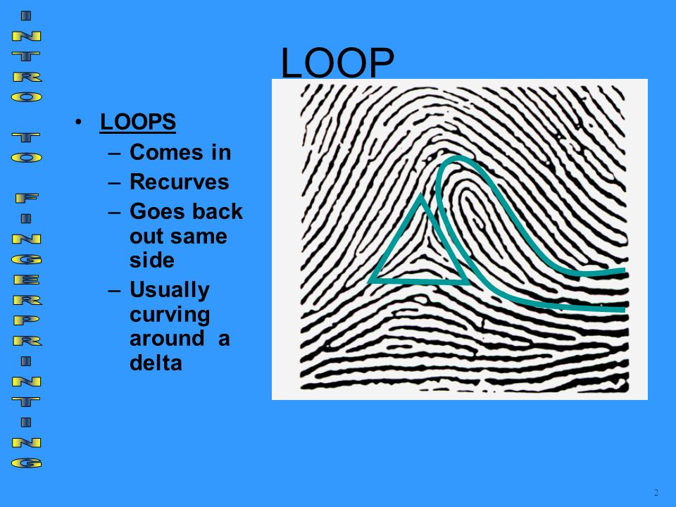 LOOP LOOPS –Comes in –Recurves –Goes back out same side –Usually curving around a delta 2
