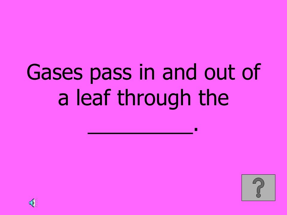 Gases pass in and out of a leaf through the _________.