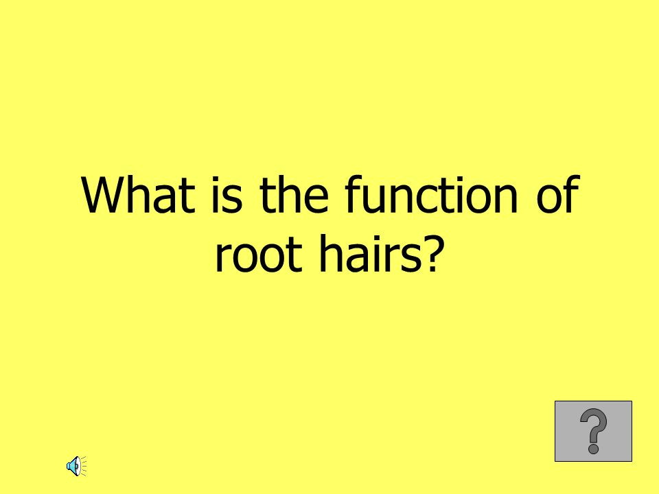 What is the function of root hairs?