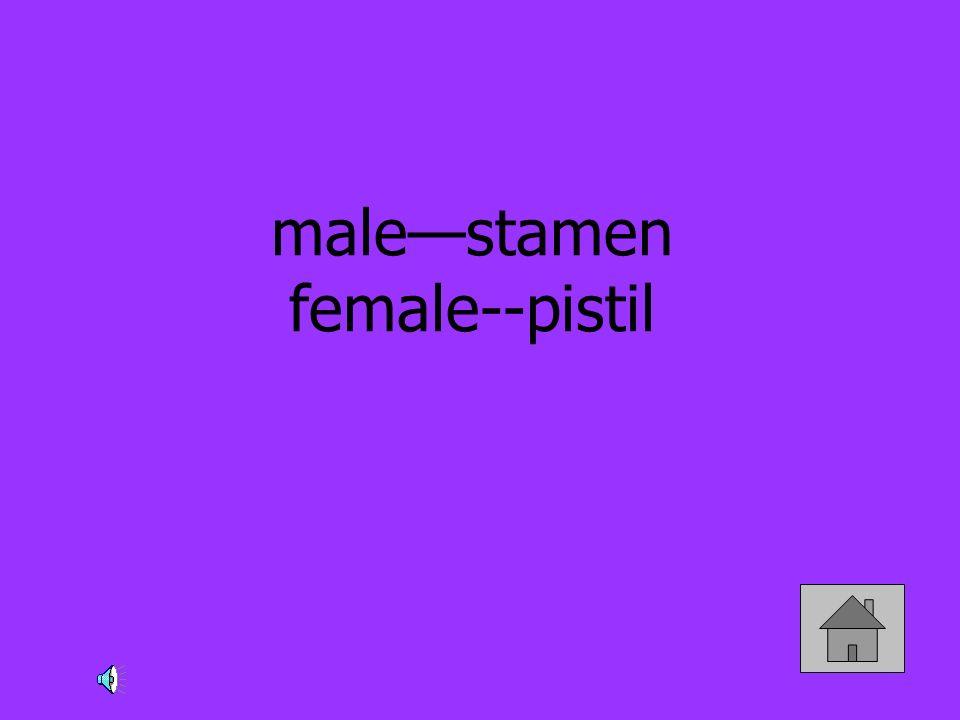 malestamen female--pistil