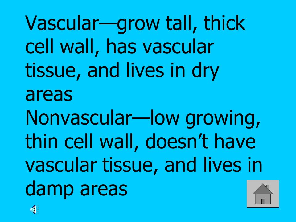 Vasculargrow tall, thick cell wall, has vascular tissue, and lives in dry areas Nonvascularlow growing, thin cell wall, doesnt have vascular tissue, and lives in damp areas