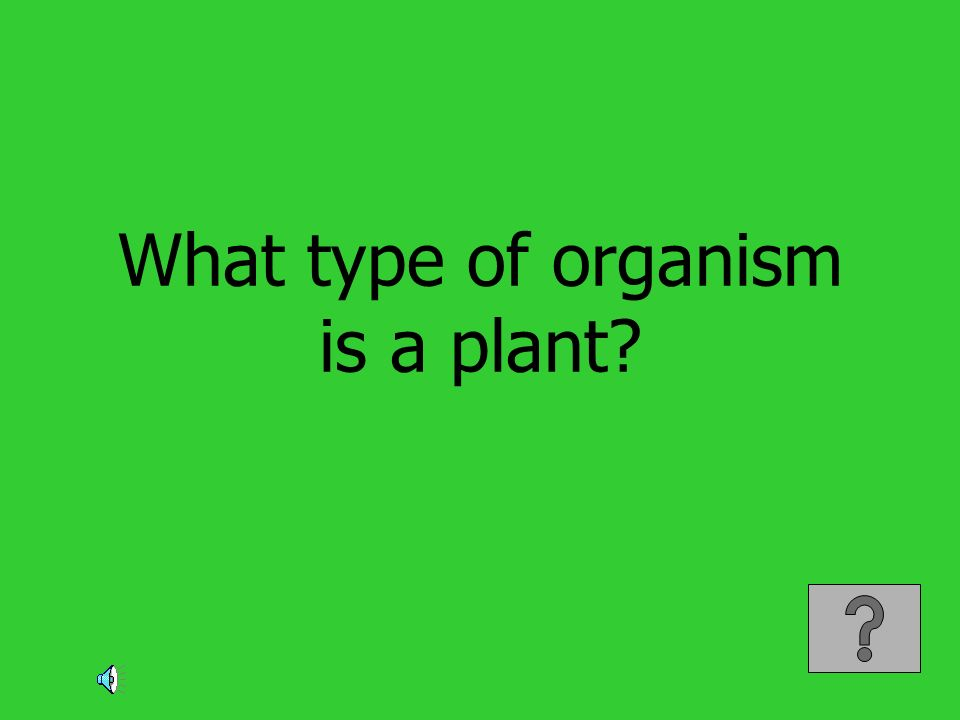 What type of organism is a plant?