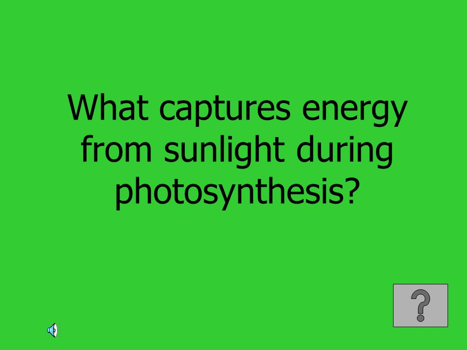 What captures energy from sunlight during photosynthesis?