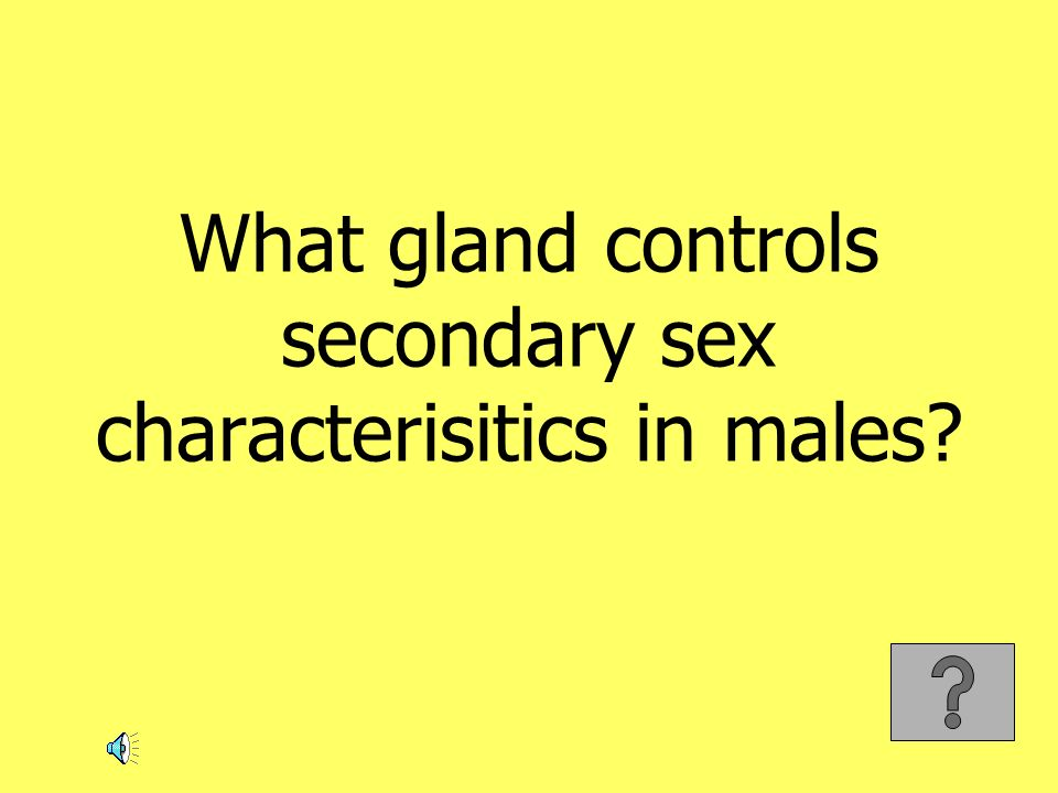 What gland controls secondary sex characterisitics in males?