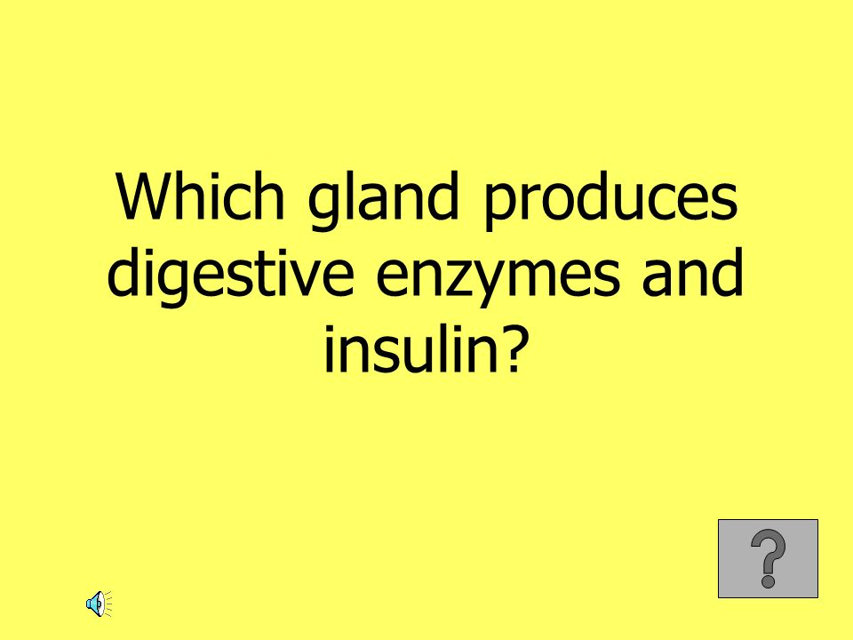 Which gland produces digestive enzymes and insulin?