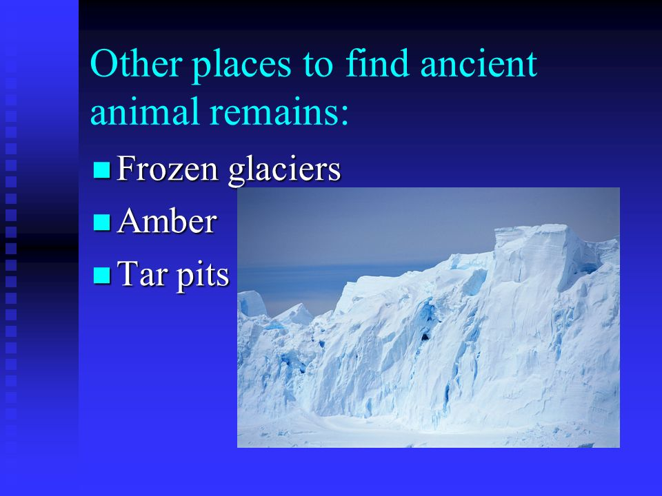 Other places to find ancient animal remains: Frozen glaciers Frozen glaciers Amber Amber Tar pits Tar pits