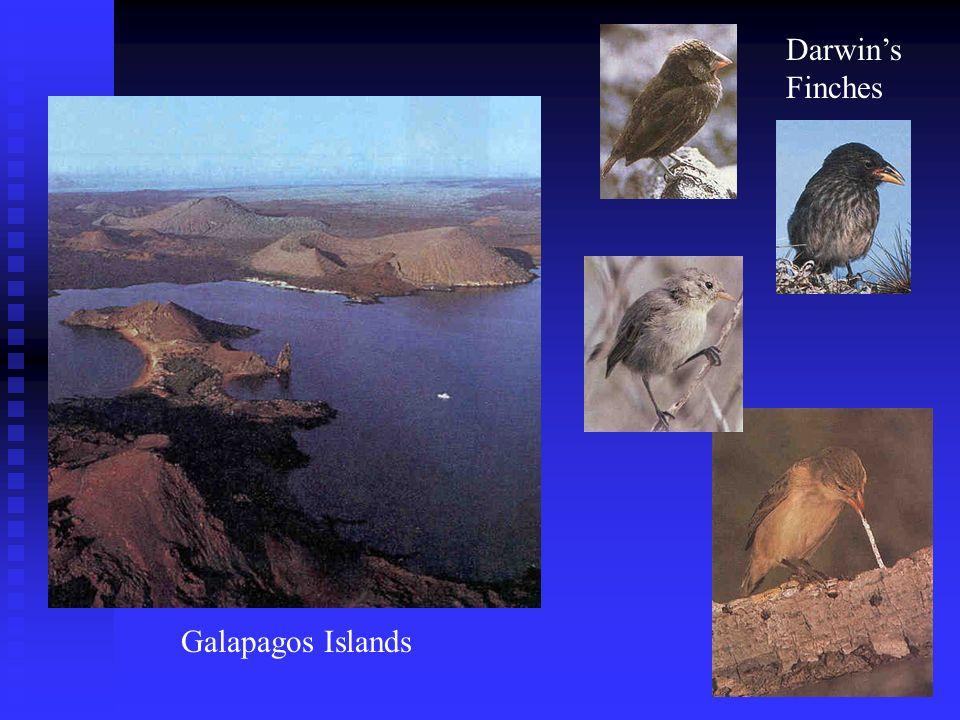 Galapagos Islands Darwins Finches