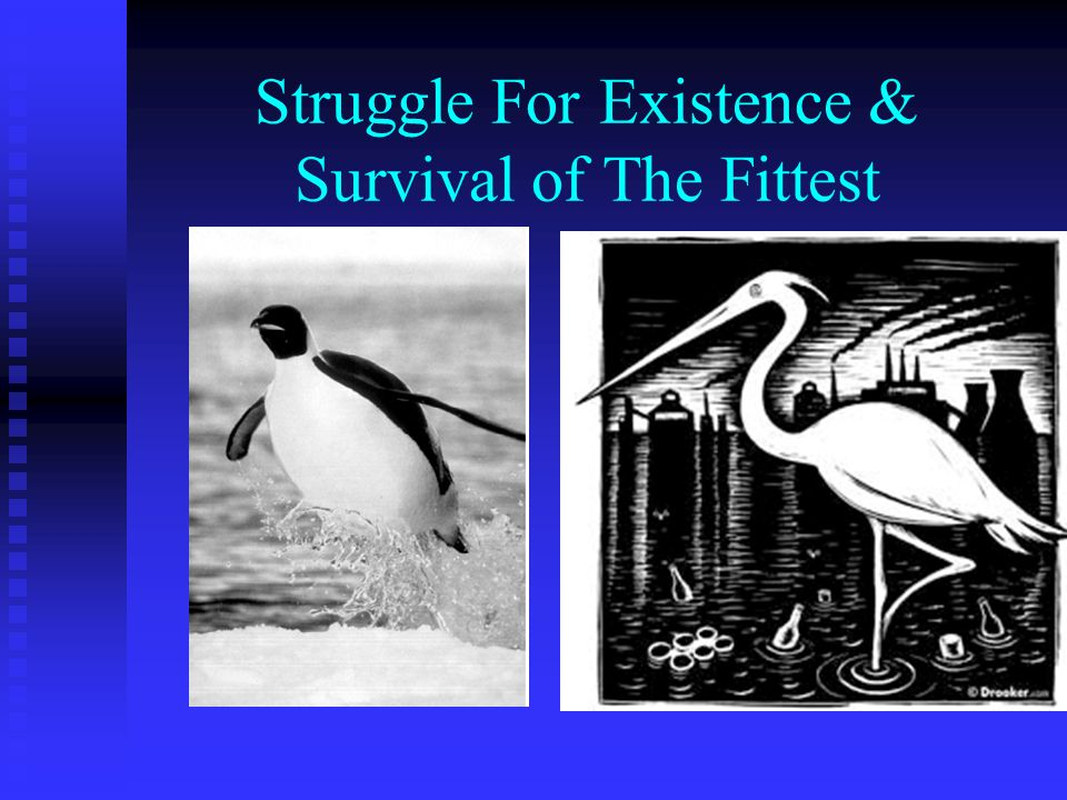 Struggle For Existence & Survival of The Fittest