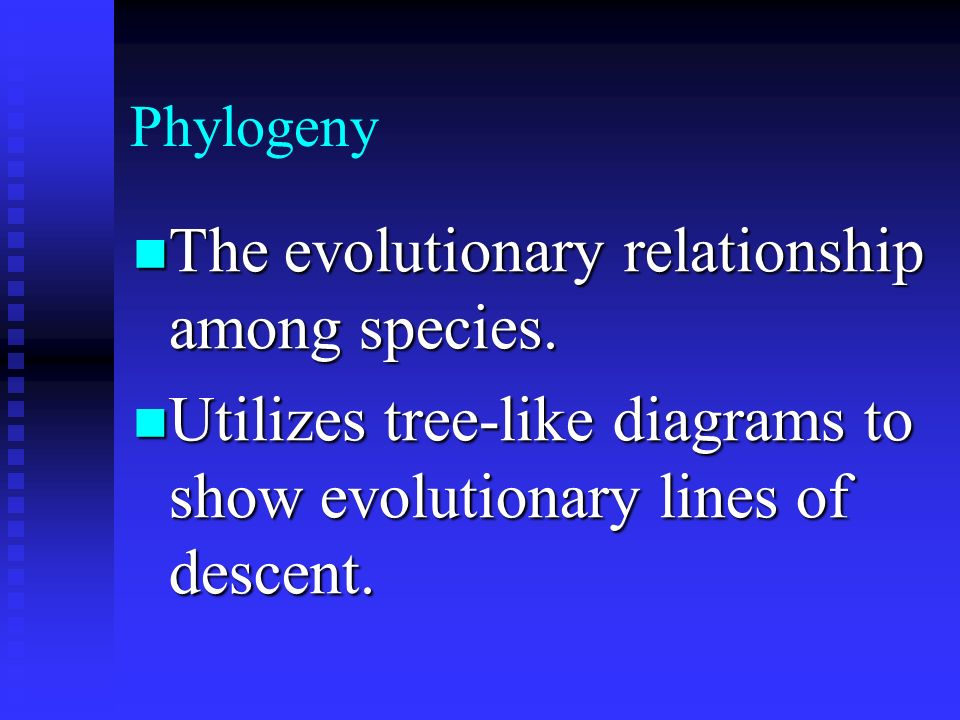 Phylogeny The evolutionary relationship among species. The evolutionary relationship among species. Utilizes tree-like diagrams to show evolutionary l