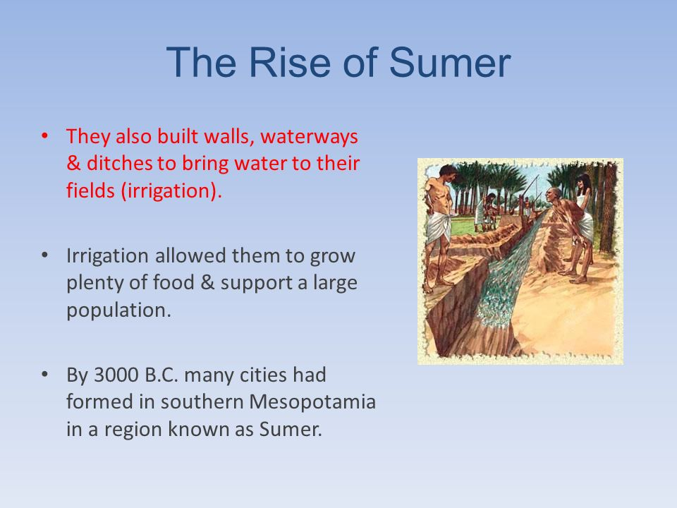 The Rise of Sumer They also built walls, waterways & ditches to bring water to their fields (irrigation). Irrigation allowed them to grow plenty of fo