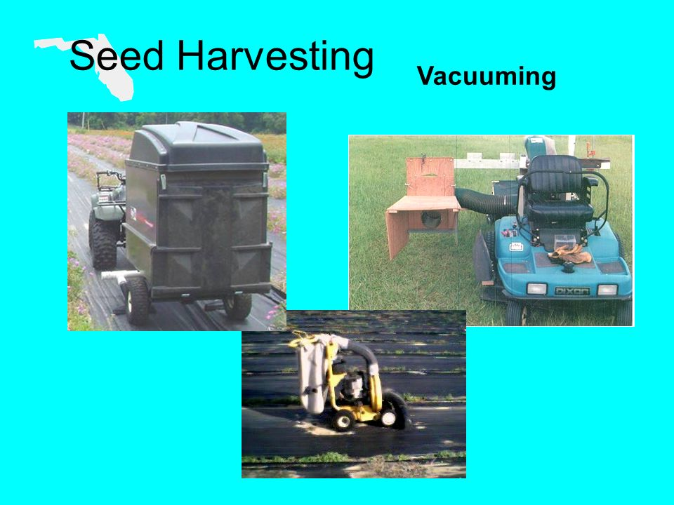 Seed Harvesting Vacuuming