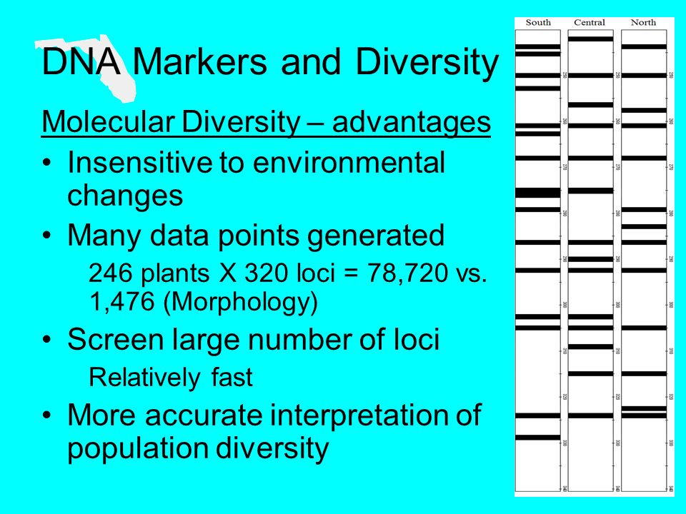 Molecular Diversity – advantages Insensitive to environmental changes Many data points generated 246 plants X 320 loci = 78,720 vs.