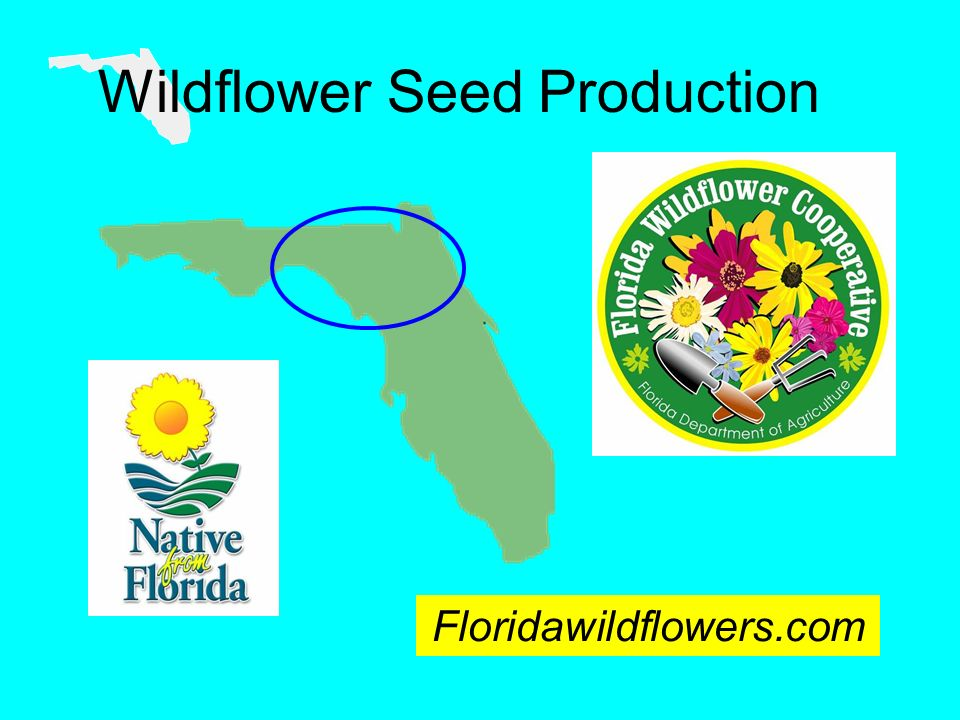 Wildflower Seed Production Floridawildflowers.com
