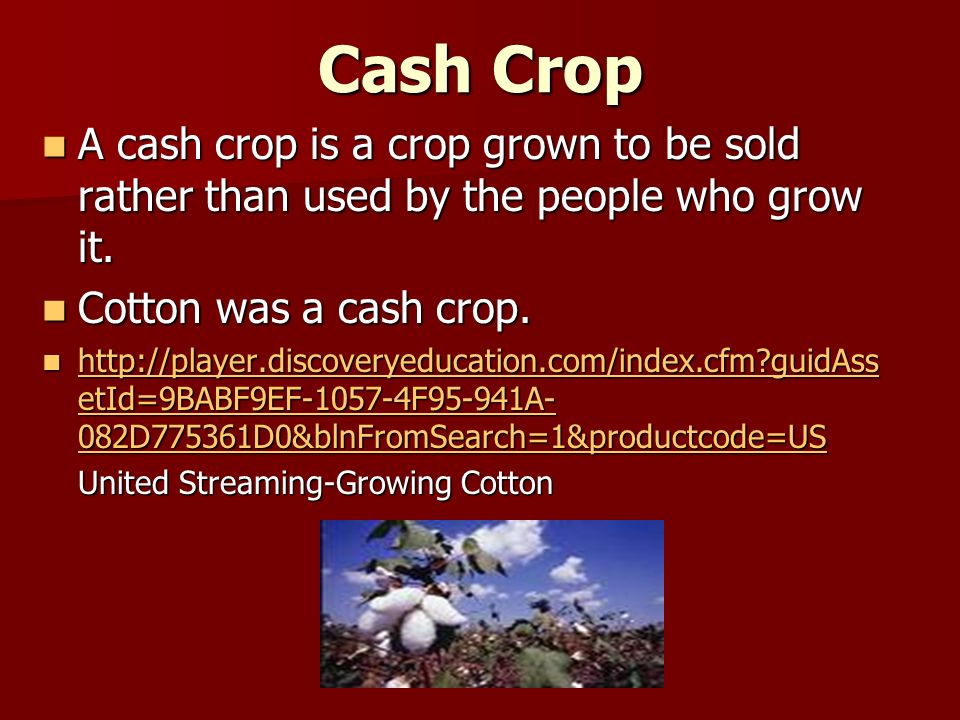 Cash Crop A cash crop is a crop grown to be sold rather than used by the people who grow it.