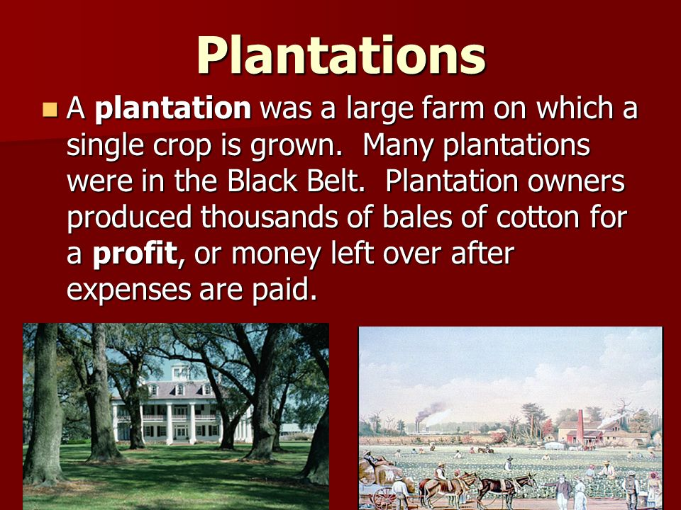 Plantations A plantation was a large farm on which a single crop is grown.
