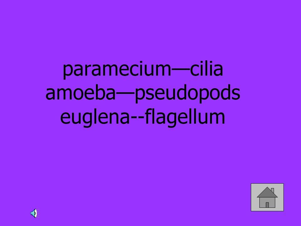 parameciumcilia amoebapseudopods euglena--flagellum
