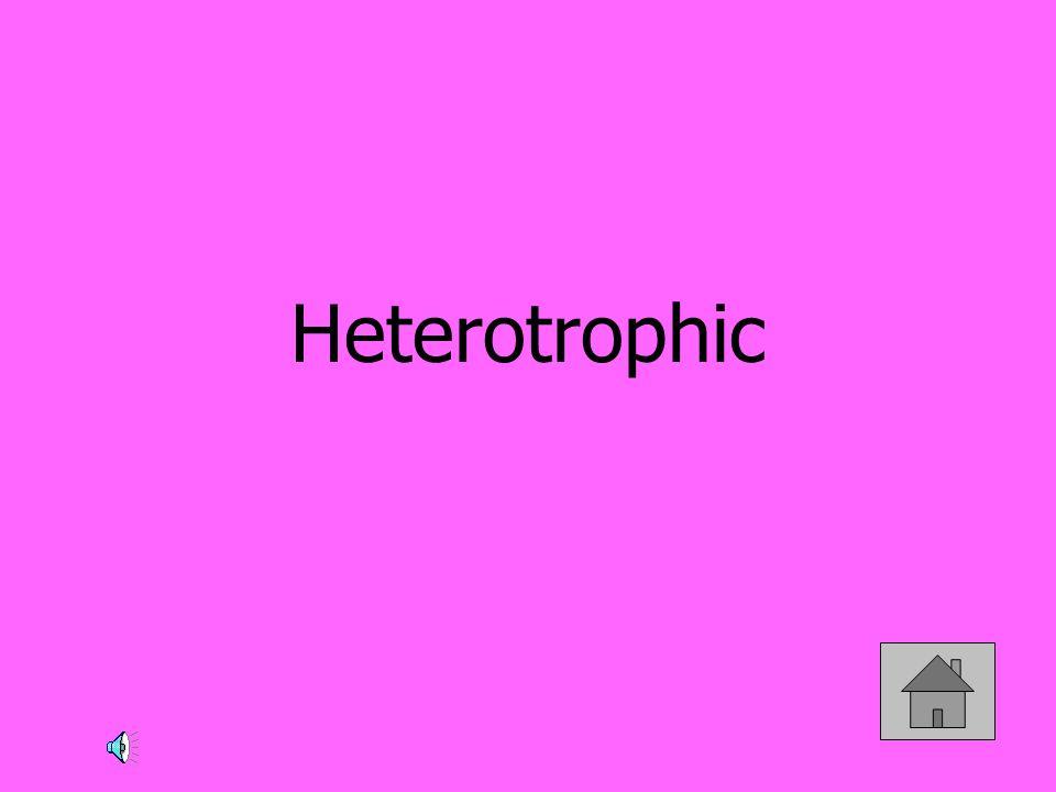 Heterotrophic