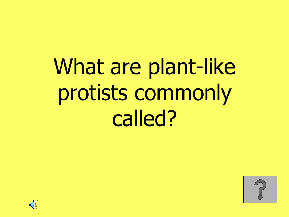 What are plant-like protists commonly called?