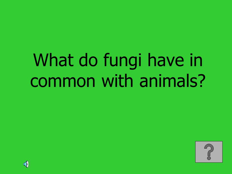 What do fungi have in common with animals?
