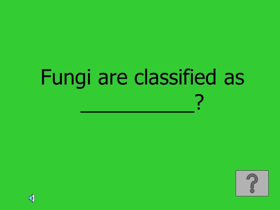 Fungi are classified as __________?