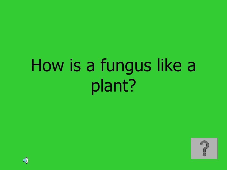 How is a fungus like a plant?
