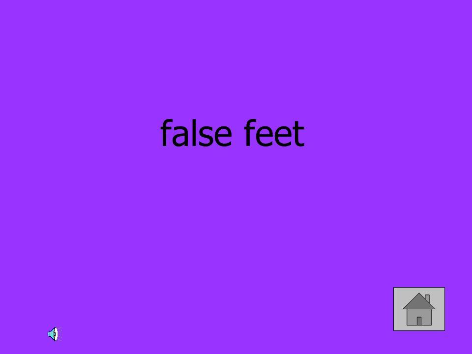 false feet