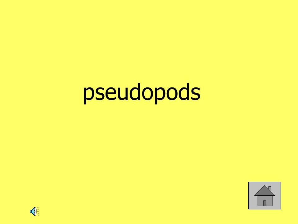 pseudopods