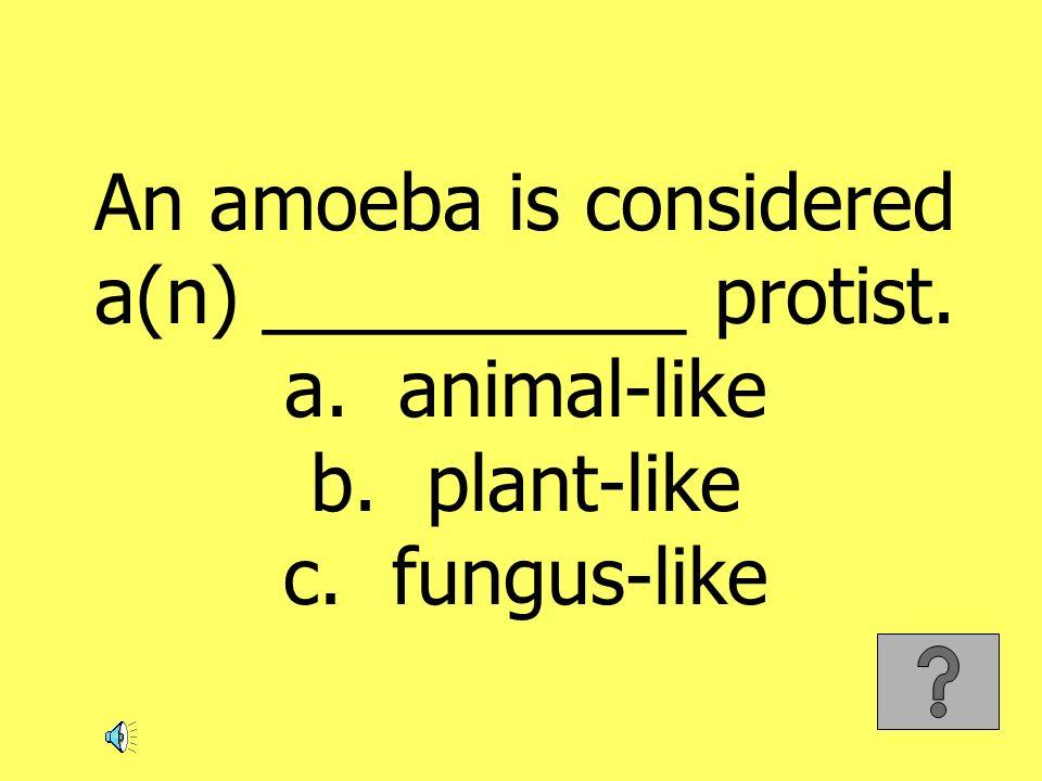 An amoeba is considered a(n) __________ protist. a. animal-like b. plant-like c. fungus-like
