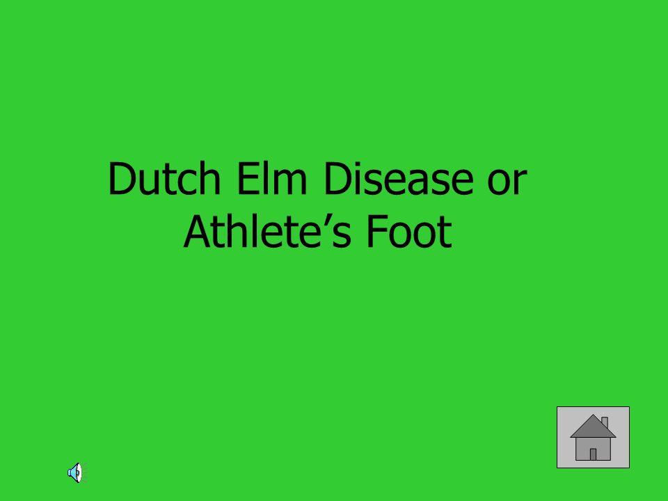 Dutch Elm Disease or Athletes Foot