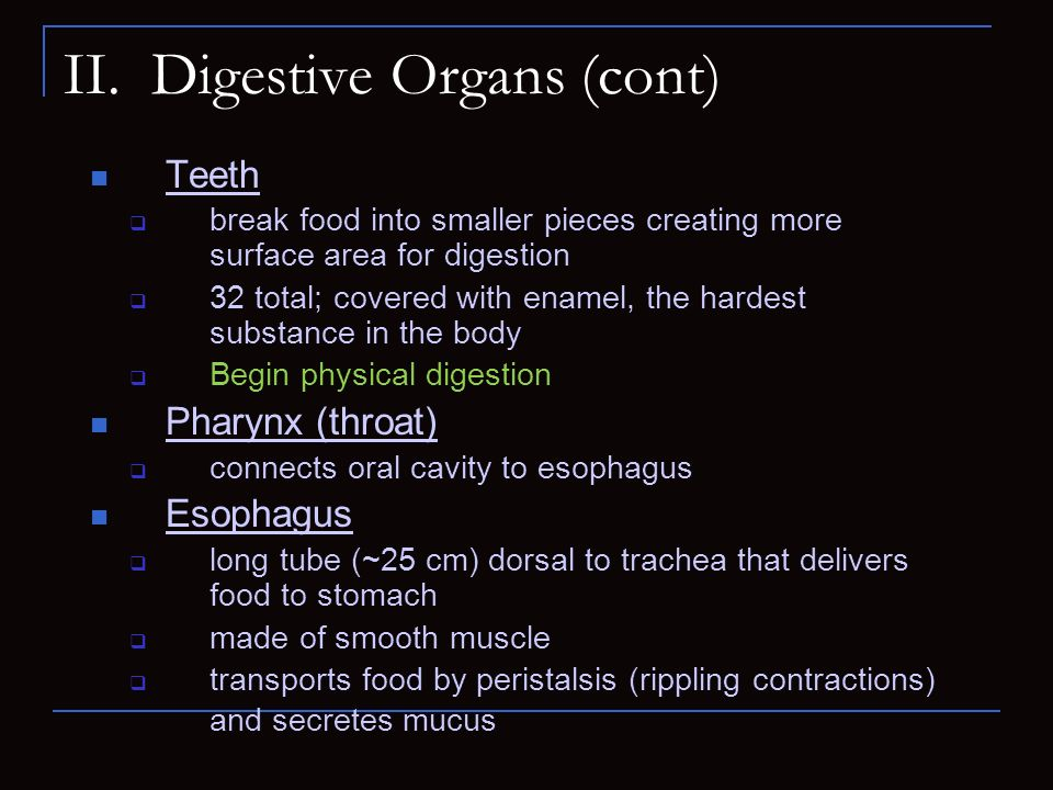 II. Digestive Organs (cont) Teeth break food into smaller pieces creating more surface area for digestion 32 total; covered with enamel, the hardest s