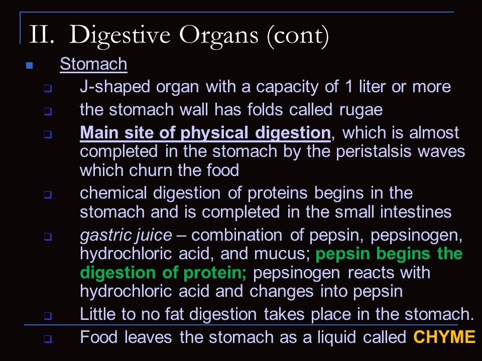 II. Digestive Organs (cont) Stomach J-shaped organ with a capacity of 1 liter or more the stomach wall has folds called rugae Main site of physical di