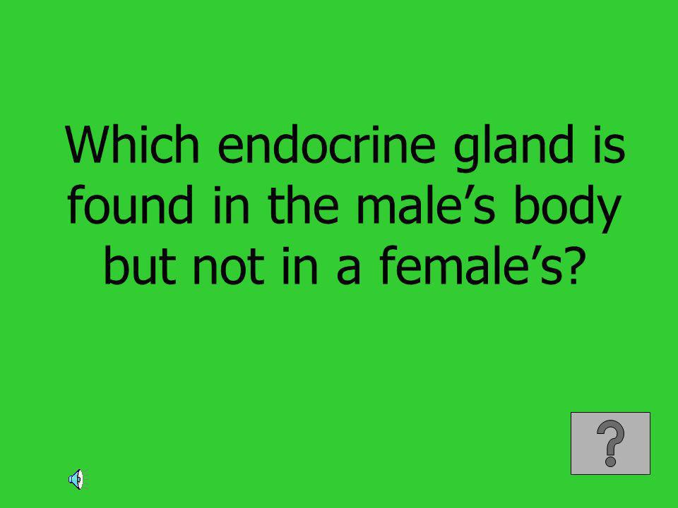 Which endocrine gland is found in the males body but not in a females?