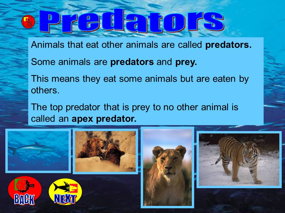 Animals that eat other animals are called predators. Some animals are predators and prey. This means they eat some animals but are eaten by others. Th