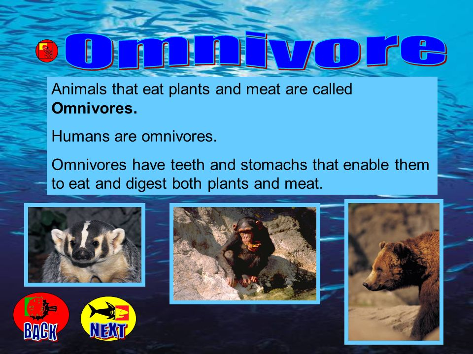 Animals that eat plants and meat are called Omnivores. Humans are omnivores. Omnivores have teeth and stomachs that enable them to eat and digest both