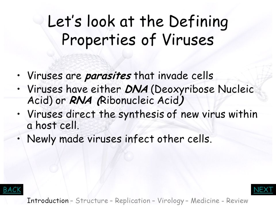 BACKNEXT Who do viruses infect? Viruses infect Bacteria –These viruses are called bacteriophages Viruses infect Plants –One example is the Tobacco Mos