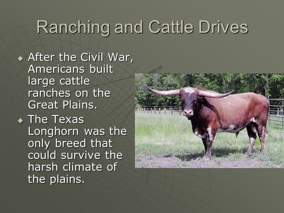 Ranching and Cattle Drives After the Civil War, Americans built large cattle ranches on the Great Plains. After the Civil War, Americans built large c