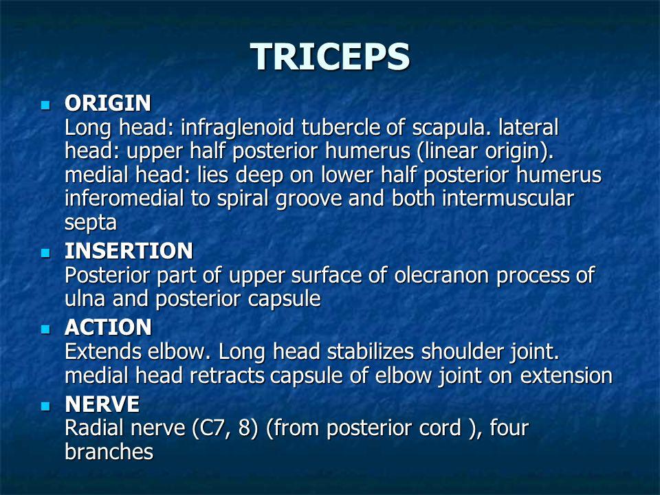 VASTUS MEDIALIS ORIGIN Lower intertrochanteric line, spiral line, medial linea aspera and medial intermuscular septum ORIGIN Lower intertrochanteric l