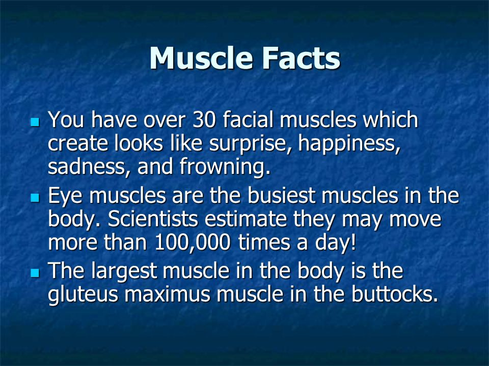 Muscle Facts You have over 30 facial muscles which create looks like surprise, happiness, sadness, and frowning.