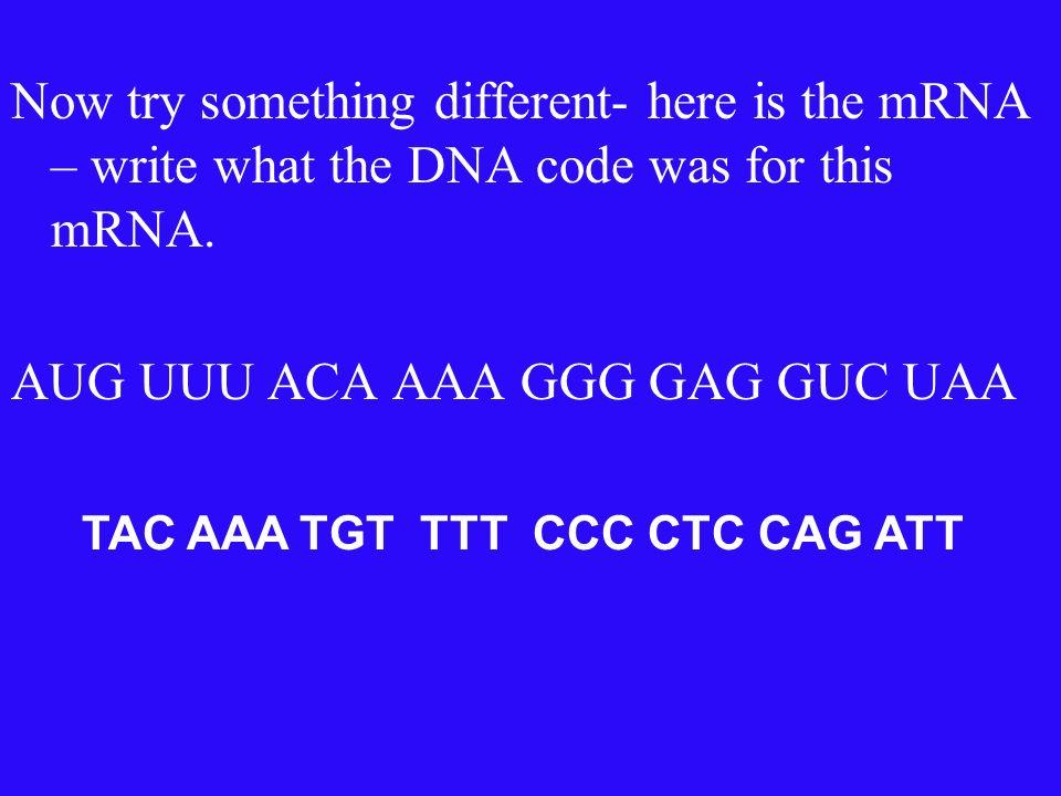 Try one!!!! Write the amino acids that correspond to the codon!!!! AUG UUU ACA AAA GGG GAG GUC UAA methionene, phenylalanine, threonine, lysine, glyci