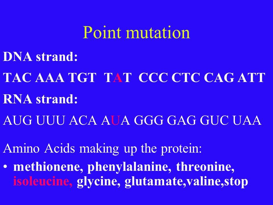 Practice DNA strand: TAC AAA TGT TTT CCC CTC CAG ATT RNA strand: AUG UUU ACA AAA GGG GAG GUC UAA Amino Acids making up the protein: methionene, phenyl