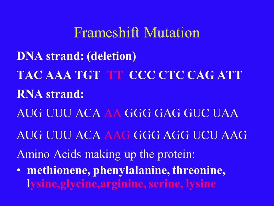 Point mutation DNA strand: TAC AAA TGT TAT CCC CTC CAG ATT RNA strand: AUG UUU ACA AUA GGG GAG GUC UAA Amino Acids making up the protein: methionene,