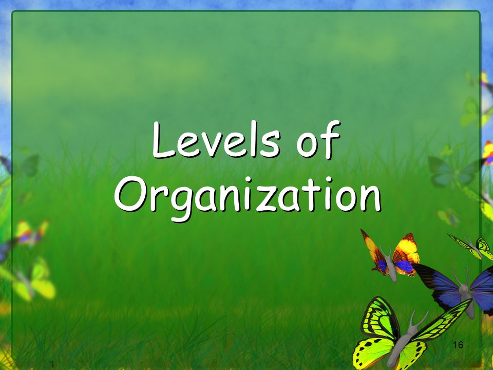 16 Levels of Organization