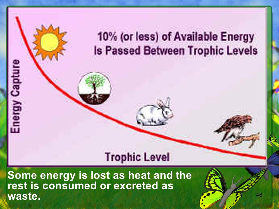 46 Some energy is lost as heat and the rest is consumed or excreted as waste.