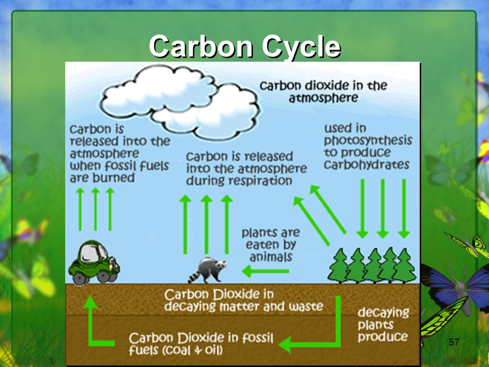 57 Carbon Cycle