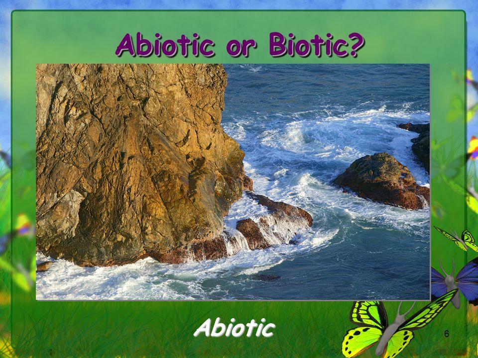 6 Abiotic
