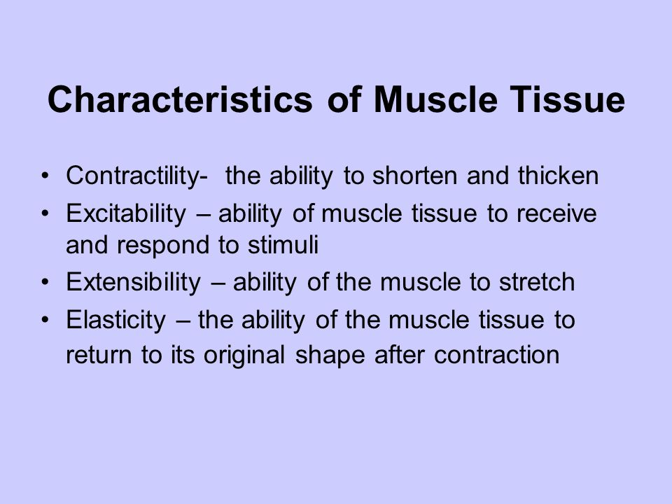 Characteristics of Muscle Tissue Contractility- the ability to shorten and thicken Excitability – ability of muscle tissue to receive and respond to s