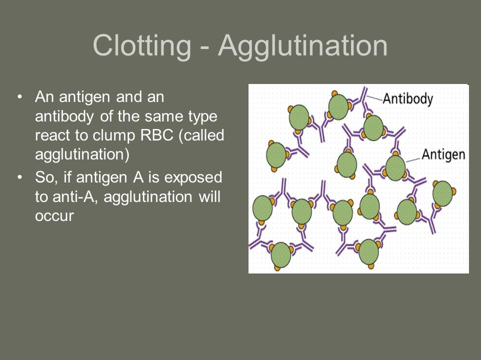 Clotting - Agglutination An antigen and an antibody of the same type react to clump RBC (called agglutination) So, if antigen A is exposed to anti-A,