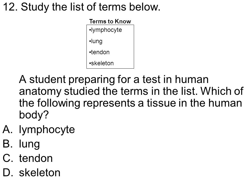 12. Study the list of terms below. A student preparing for a test in human anatomy studied the terms in the list. Which of the following represents a