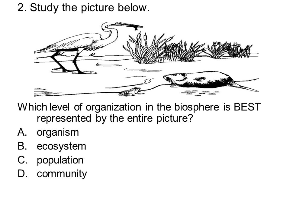2. Study the picture below. Which level of organization in the biosphere is BEST represented by the entire picture? A.organism B.ecosystem C.populatio