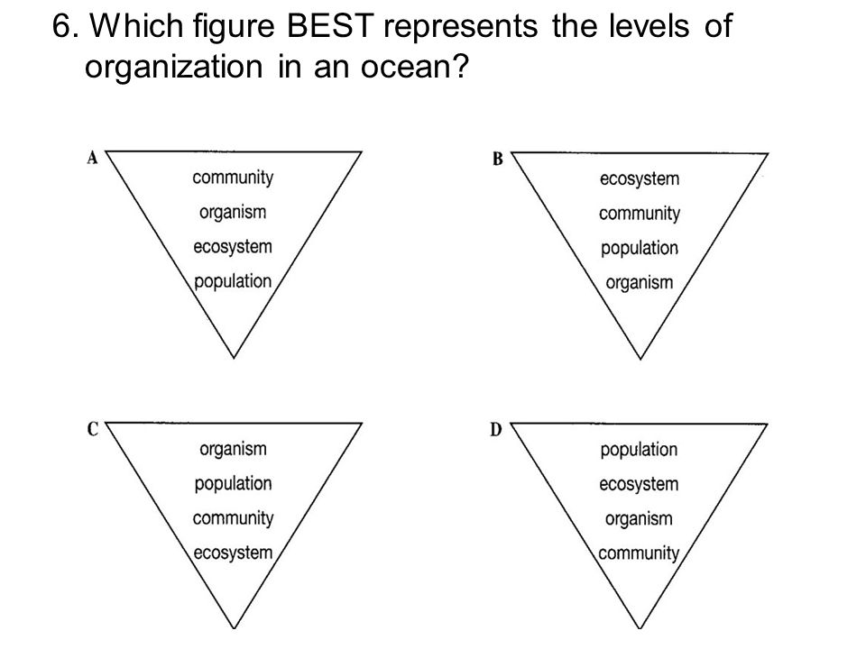6. Which figure BEST represents the levels of organization in an ocean?